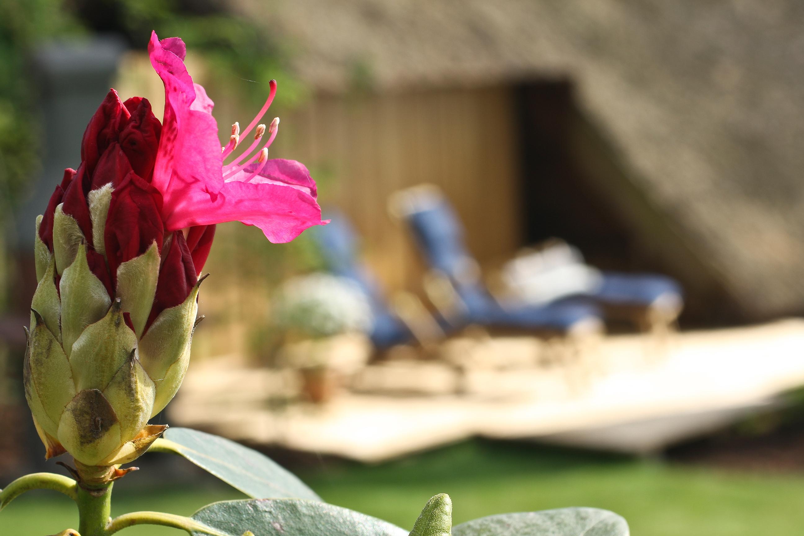 Blume mit Liegestühlen im Hintergrund
